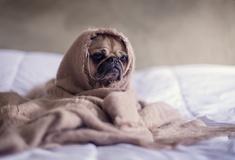 Haustiere erlaubt san lorenzo hotel madrid